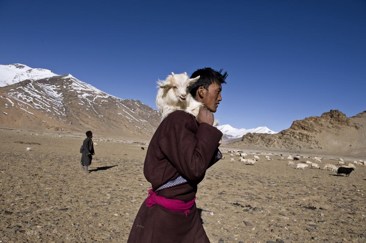 Nomads Of Rajasthan. nomads have roamed the