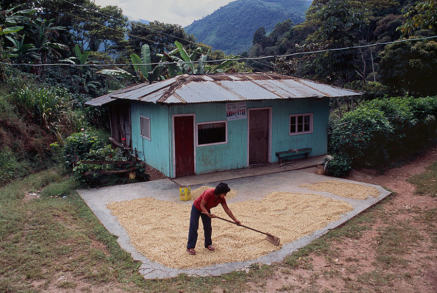 Drying Coffee, Brazil