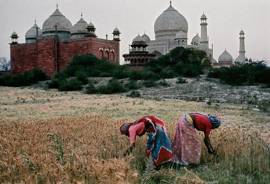 INDIA-10337