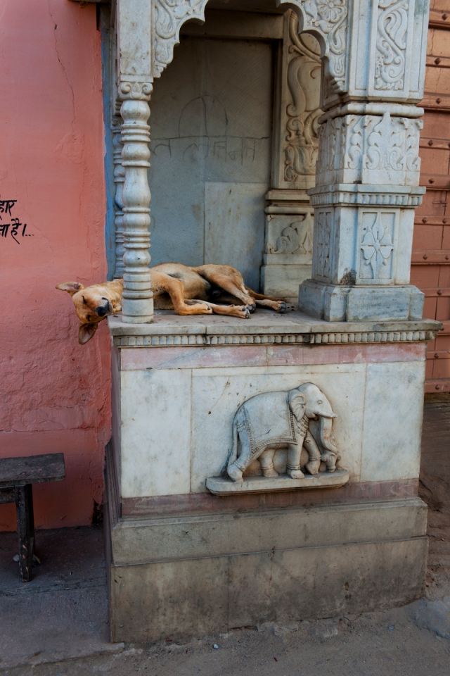 _2SM2652; India; 04/2012; INDIA-11987. A dog sleeps.retouched_Sam Schubert