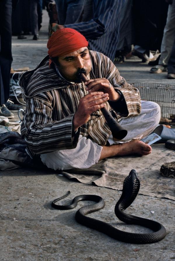Snake Charmer, Morocco, 03/1988, MOROCCO-10038