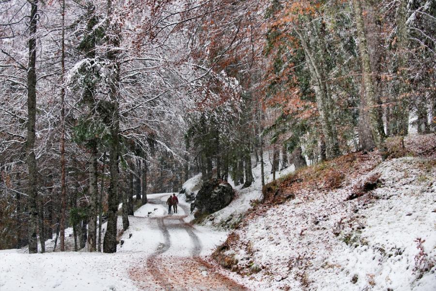 _SM21577, Italy; February 2012; Italy,