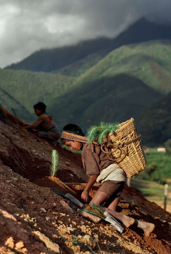 00547_09. Monsoons, Nepal, 1983, 08/1983. A young boy works on a mountainside.