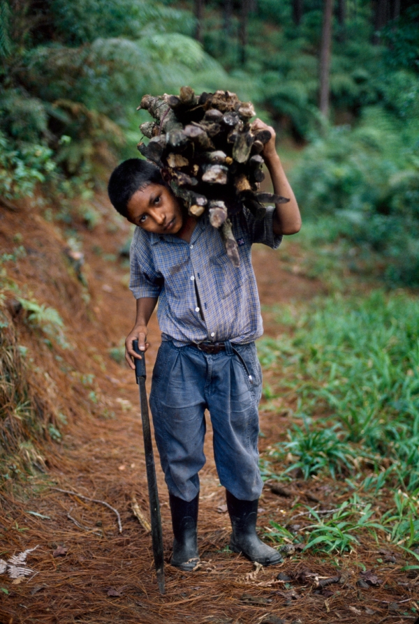 01844_12, Lavazza, Honduras, 2005, HONDURAS-10044NF3. A boy carrying sticks.  retouched_Ekaterina Savtsova 09/05/2014