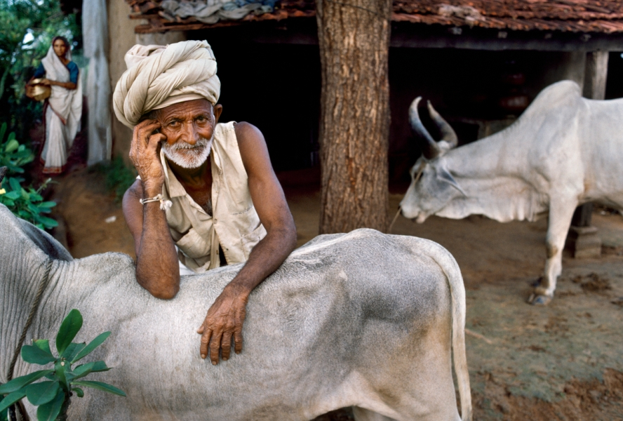 01882_15, India 50 Years After, Rajasthan, India, 09/1996, INDIA-11409NF5. A man poses with his cow. India_Book retouched_Sonny Fabbri 01/29/2015
