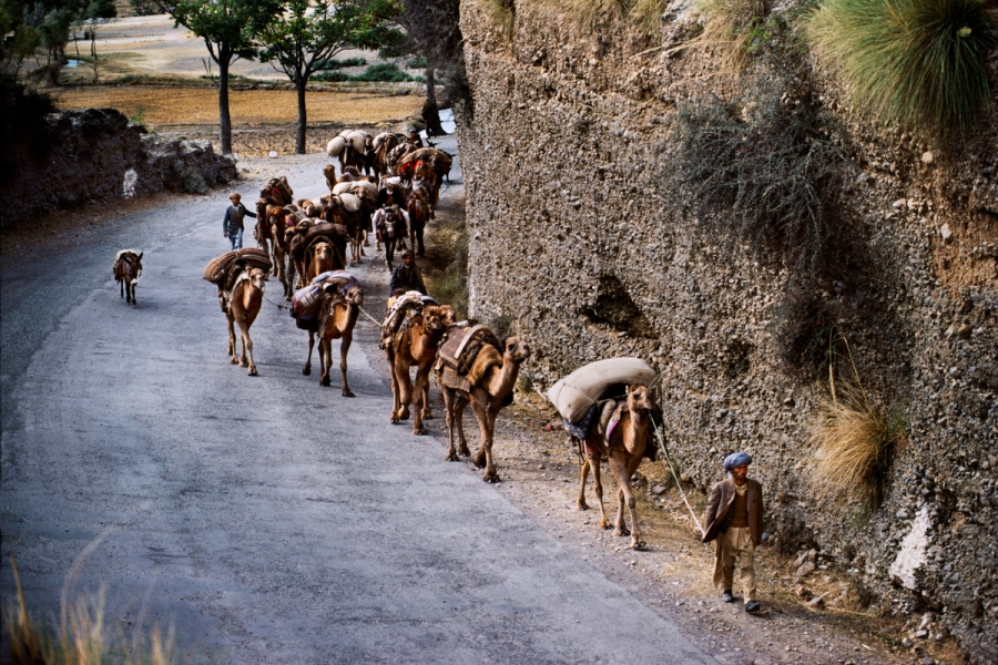 02087_14_, Afghan Border, 12/1984, AFGHN-14245NF. Train of camels walk down road by Afghan Border. retouched_Ekaterina Savtsova 04/15/2015